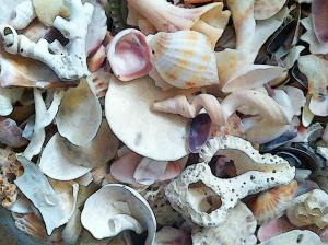 shells are great MGD©